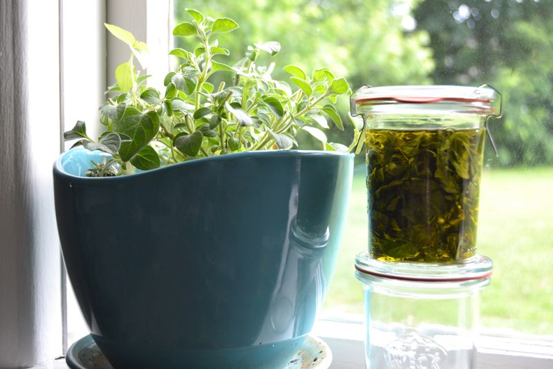 How To Make Your Own Oil Of Oregano At Home?
